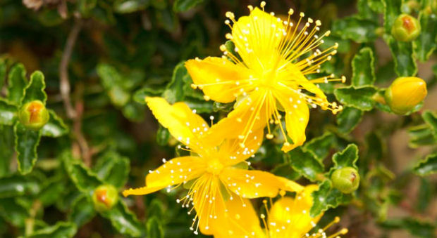 Fauna e Flora a Formentera